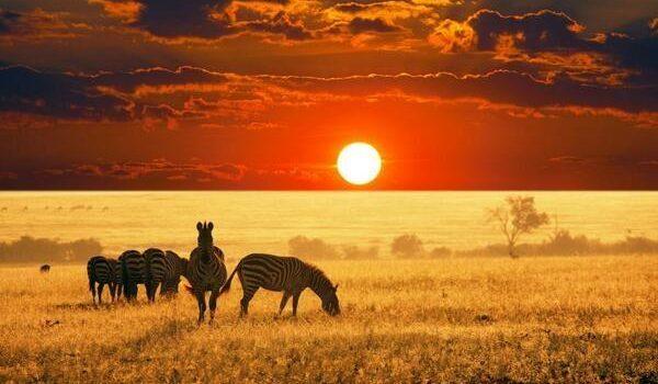 Benzersiz bir deneyim : Afrika Safari Turu