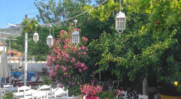 Üzüm Tatil Evi