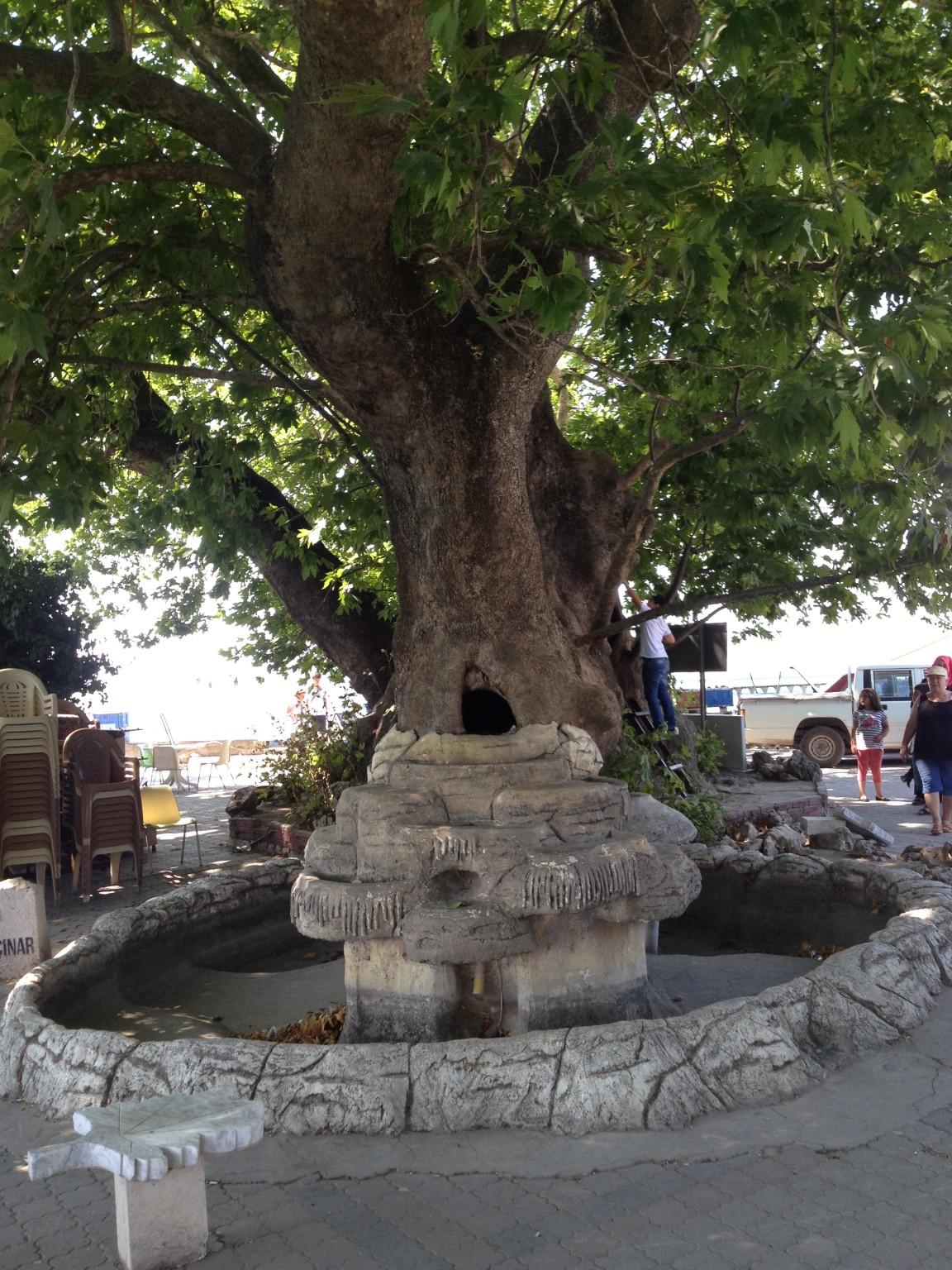 Gölyazı Köyü Ağlayan Çınar Foto