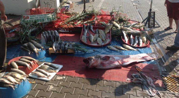 Gölyazı Köyü Balıkçılık