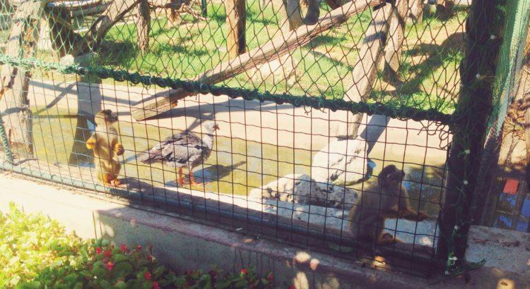 İskelet Kafalı Maymun ve Çığlıkçı Kuş