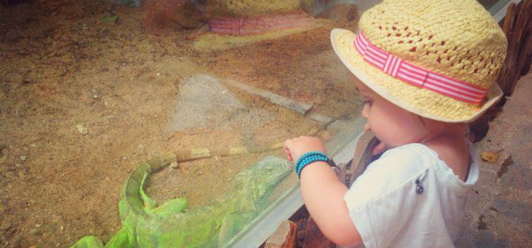 Çocuklarla Hayvanat Bahçesi Gezisi