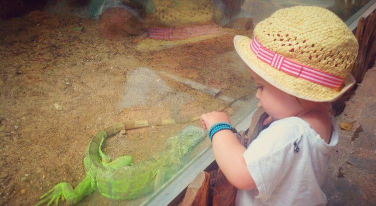 Deniz İguana ile iletişim kurmaya çalışıyor