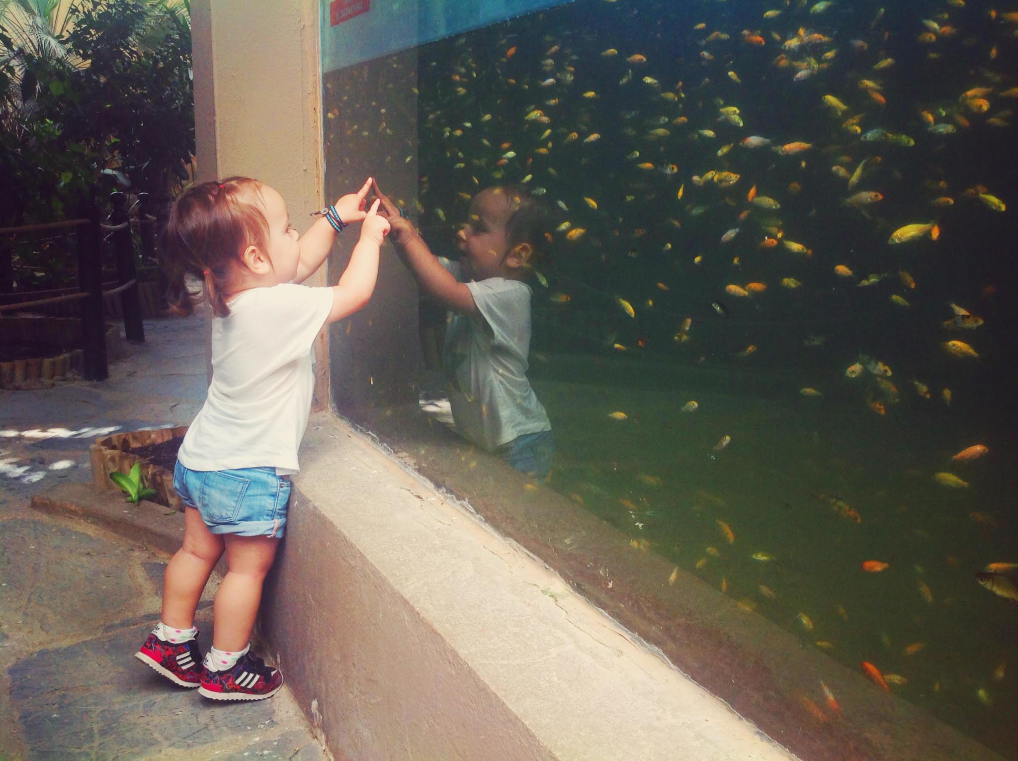 Deniz balıkları yakalamaya çalışırken
