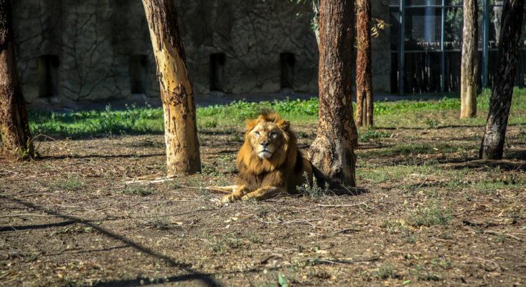 Hayran olduğumuz sevgili aslan :)