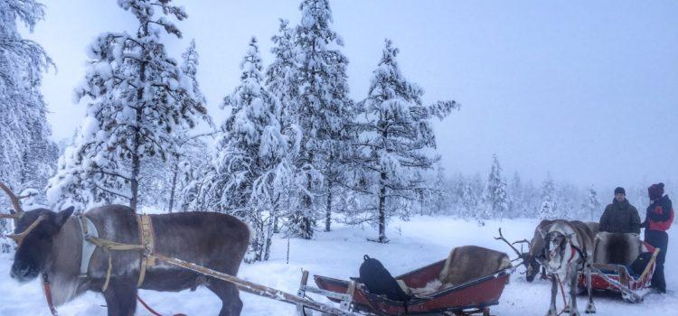 Bir kış masalı : Finlandiya Lapland Turu (Rovaniemi)